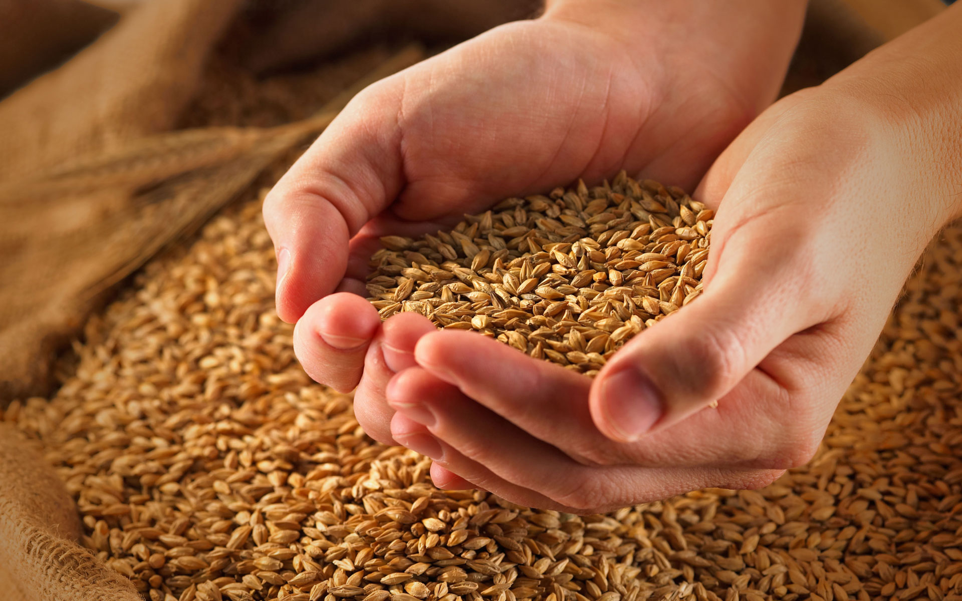 Finest Grains used best chappathi,Best Atta for chapathi